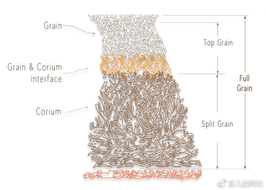 牛皮解剖图